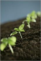 Маленькие секреты большого урожая
