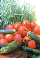 Профилактика заболеваний томатов и огурцов