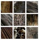 Древесный аккорд - древесные, ароматы, древесные, ноты, женская, мужская, парфюмерия, ralph, lauren, polo, christian, d