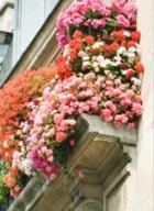 Цветущий сад... на балконе!