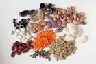 Фасоль – самый сбалансированный продукт