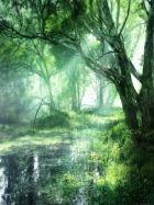 Какая чертовщина водится на болотах?