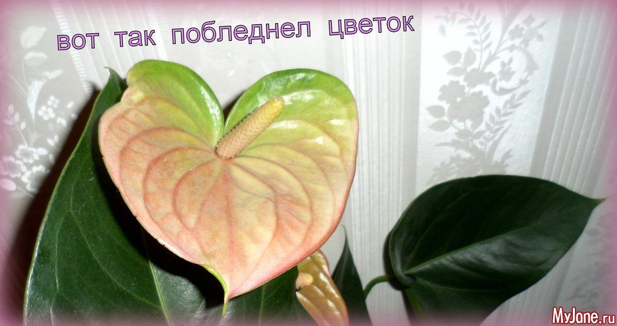 Подбросили цветок