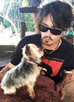 Власти Австралии пригрозили изъять и усыпить собак Джонни Деппа