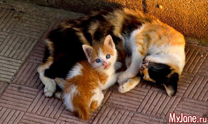 Когда любовь к животным становится патологией…