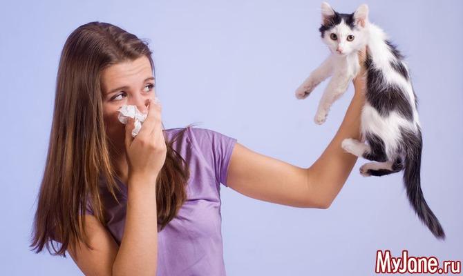 Питомец для аллергика: заводить или не заводить?
