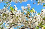 Вы готовы к весне?