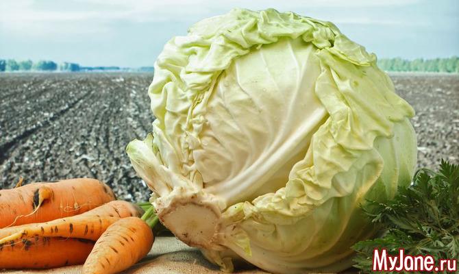Блюда из капусты – гарантия правильной работы кишечника