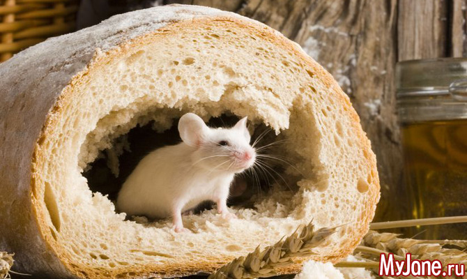 И мышь белая… на моцацикле (с)