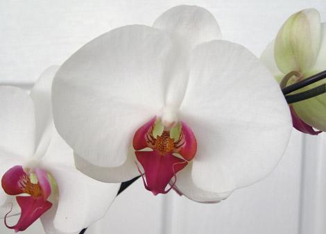 Как ухаживать за орхидеей 64031