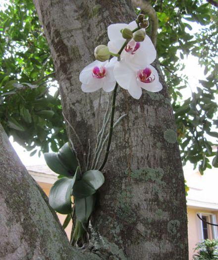Как ухаживать за орхидеей 10560