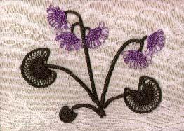 Горные цветы названия и особенности