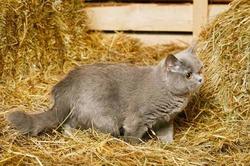 Кошки специально игнорируют своих хозяев