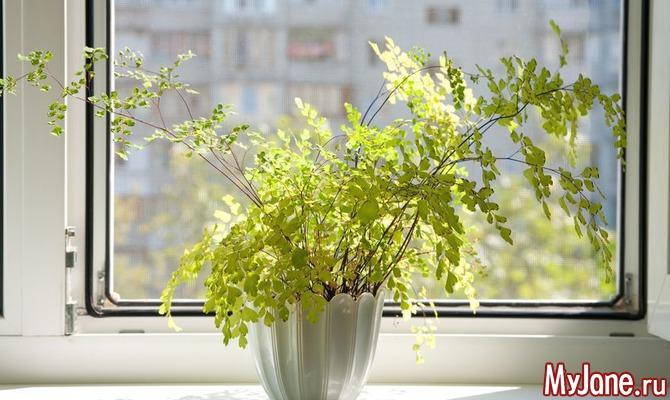 10 самых полезных растений для дома