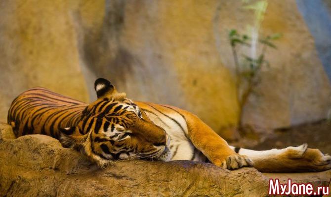 Нужно ли вести ребенка в зоопарк?