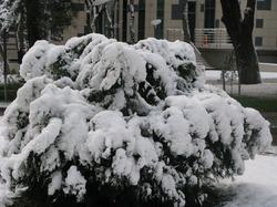 И на Юг России пришла зима.