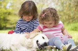 Собака дома – профилактика аллергии и астмы у детей