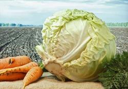 Фрукты и овощи против астмы