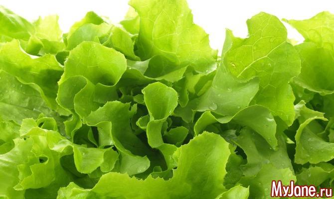 Секреты зеленого салата