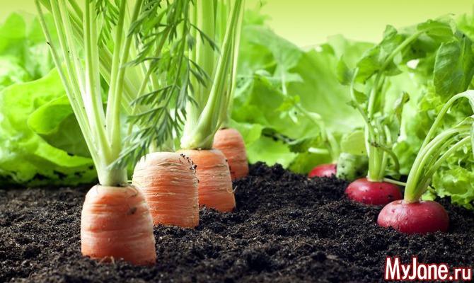 Блюда из моркови: вкусно и полезно