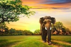 В Америке открыли лагерь похудения для слонов
