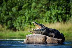 На пляжах Мексики отныне «загорают» крокодилы