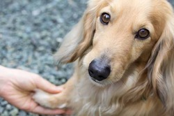 Туристы добиваются возможности брать на отдых собак