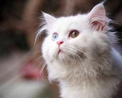 Без кота и жизнь не та.;)