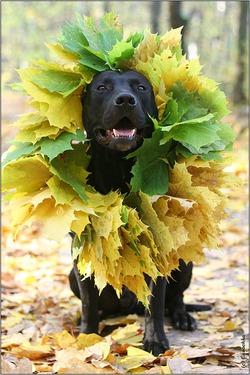 Осенний пес:)
