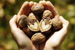Грецкий орех влияет на работу сердца и позволяет сохранять стабильный вес
