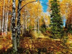 Лес, грибы, солнце.