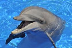 Способности дельфинов оказались под большим вопросом