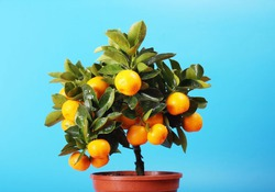 Как деревце лимона может защитить от гриппа?