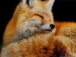 С кем из животных вы себя ассоциируете?