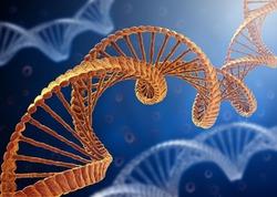 Найдены гены юности