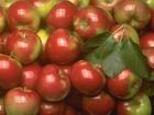 Яблоки против старения