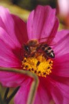 Пчелиные дары