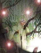 Дерево женской магии
