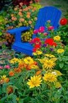 Цветы в оформлении участка