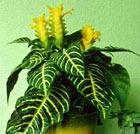 Цветы в доме. Советы любительницам комнатных растений