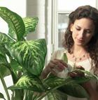 Тенелюбивые растения для вашего дома