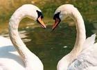 Магия февраля, или День всех влюбленных