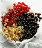 «Сладку ягоду ели вместе...». Часть 1