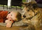 Особенности поведения собаки