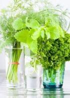 Пряно-вкусовые растения