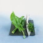 Дикорастущие растения, полезные для человека. Часть 1