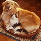 Как уживаются кошки и другие животные в доме