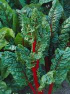 Чудо-овощ мангольд