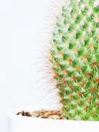 Семенное размножение кактусов. Часть 1