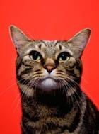 Как воспитать «леди»-кошку  или «джентльмена»-кота?
